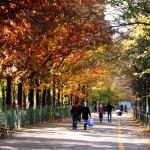 Parc Drumul Taberei toamna Fotoblog